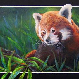 Mary McCullah - Bamboo Basking--Red Panda
