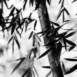 Bamboo Leaves. Black and White by Jenny Rainbow