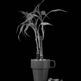 Tom Mc Nemar - Bamboo Plant