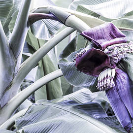 Banana Beginnings in Cool Shades by Kerri Ligatich