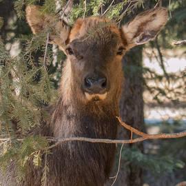 Banff Queen by Rhonda Robinson