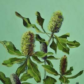 Banksias Australian Flora Painting by Chris Hobel