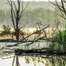 Kimberleigh Ladd - Banner Marsh Mist