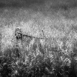 Bill Wakeley - Barb Wire Fence