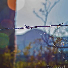 Barbed Wire Arizona by Stephen Whalen