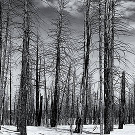 Nicholas Blackwell - Bare Forest