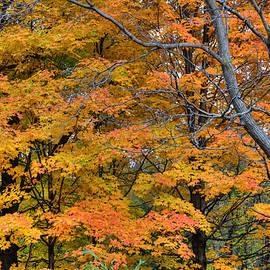 Gunther Schabestiel - Bare Tree