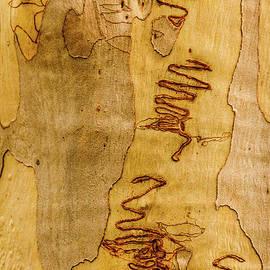 Bark SI2 by Werner Padarin