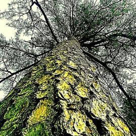 Michael Hoard - Bark Up The Tall Pine Tree Abstract In Felicina  Louisiana