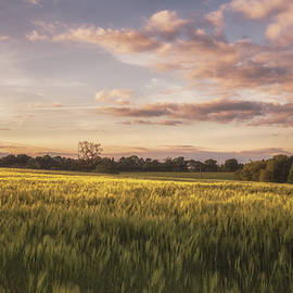 Barley Field Sunset - Chris Fletcher