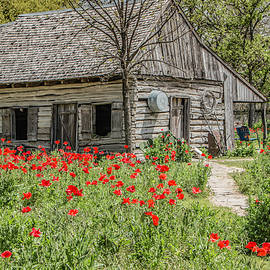 Barn and Castro Poppies by Teresa Wilson