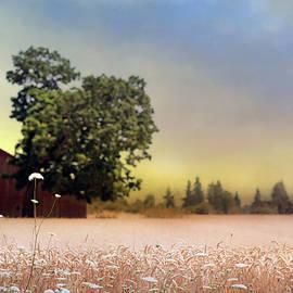 Barn and Lace - Rebecca Cozart