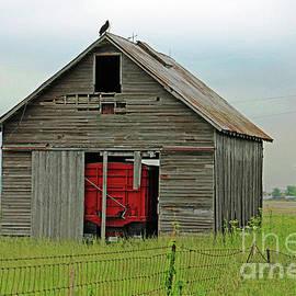 Barn Buzz by Steve Gass