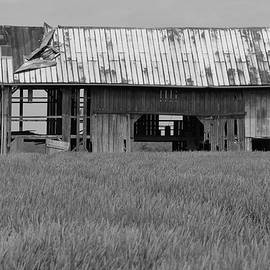 Barn in Field of Wheat BW by Jeff Roney