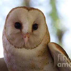 John Franke - Barn Owl