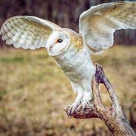 LeeAnn McLaneGoetz McLaneGoetzStudioLLCcom - Barn Owl Wings