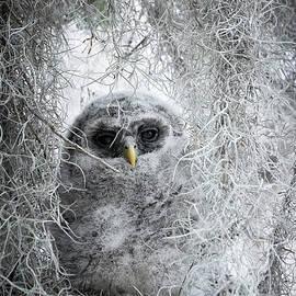 David Beebe - Barred Owl Camo