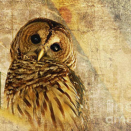 Lois Bryan - Barred Owl