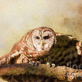 Sharon McConnell - Barred Owl Ready To Fly