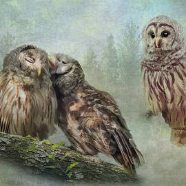 Barred Owls - Steal A Kiss by Patti Deters