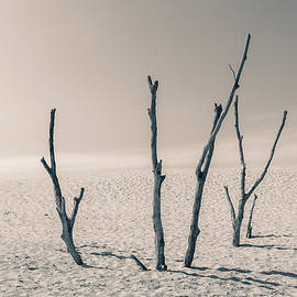 Barren by Dan Sproul