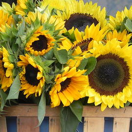 Basket Of Sunflowers by Chrisann Ellis