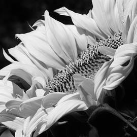 Bruce Bley - Basking in the Sunlight