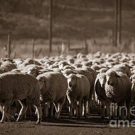 Basque Sheepherding by Janice Pariza