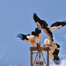 Battle of the storks by Tatiana Travelways