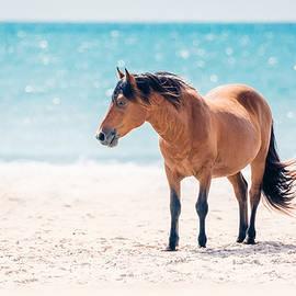 Anna Smolens - Bay Horse on Beach