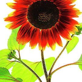 Be Happy As Sunflower. by Alexander Vinogradov