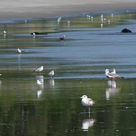 Beach Birds by Adria Trail