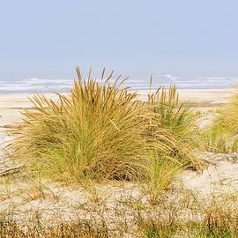 Marv Vandehey - Beach Grass at Driftwood Beach