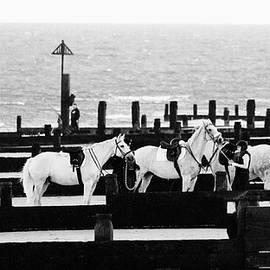 Beach Horse - Martin Newman