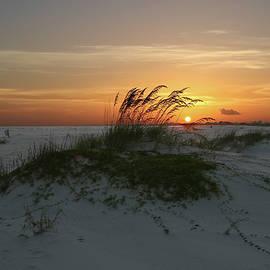 Larry Palmer - Beach Image #203