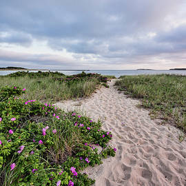 Karen Regan - Beach Path in Wellfleet
