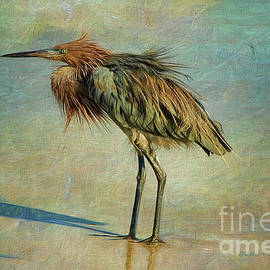 Beach Reddish Egret by Deborah Benoit