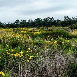 Joseph Hollingsworth - Beach Wildflowers 7
