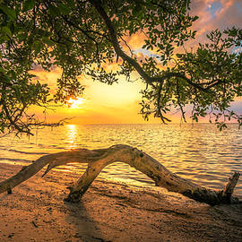 Marvin Spates - Beach Wood