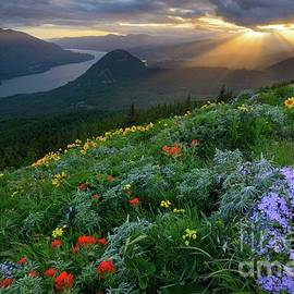 Sun Rays Shine Down over Wildflowers on Dog Mountain by Tom Schwabel
