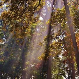 Beams of Sunshine