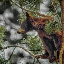 Ernie Echols - Bear Cub in a tree 3a