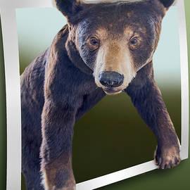 Brian Wallace - Bear Essentials - OOF