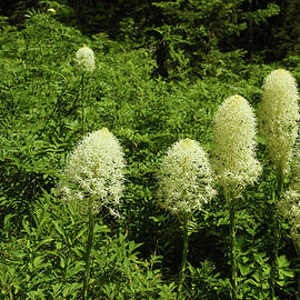 Bear Grass In The Woods by Marie Leslie
