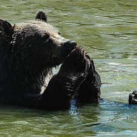 Frank Vargo - Bear Prayer