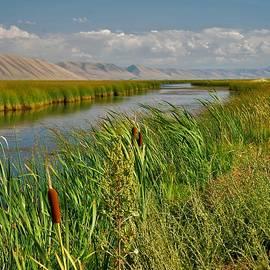 Bear River in the Bear Lake National Wildlife Refuge by Heidi Fickinger