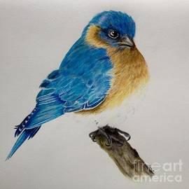 Jamie Silker - Beautiful Blue
