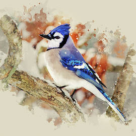 Beautiful Blue Jay - Watercolor Art by Christina Rollo