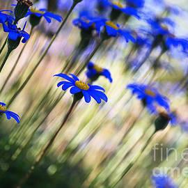 Joy Watson - Beautiful Dancing Blue Flowers Romance