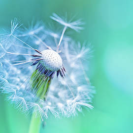 Oksana Ariskina - Beautiful Dandelion